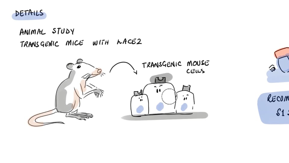 Researchers Show How SARS-COV-2 Spike Protein Causes Acute Lung Injury in Mice