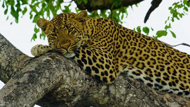 BEST OF AFRICA - African Wildlife Film - Amazing Animals in 4K UHD - Part #1