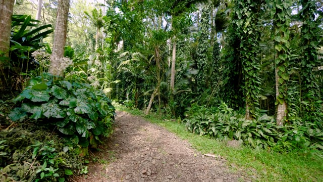 Lyon Arboretum, Oahu, Hawaii