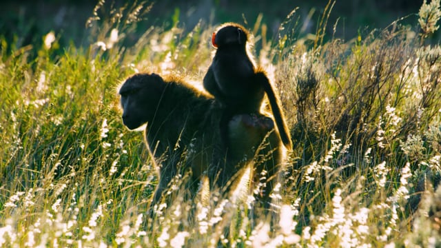 Gondwana Game Reserve, Africa - Scenic Film about Incredible Wild Nature