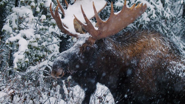 Winter Beauty of Canadian National Parks - Nature Relax Video