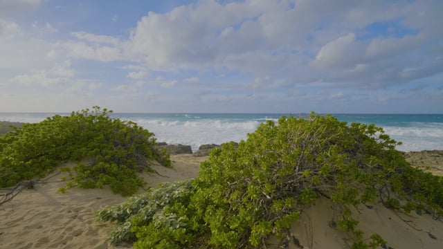 4K Ocean Waves Relaxation Video - Oahu Beaches, Kaena Point State Park - 7 Hours