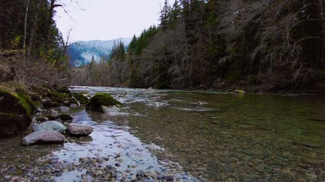 4K Virtual Hike through a Mystic Forest - Pratt River Trail - Scenic Walk (Music + Nature Sounds)