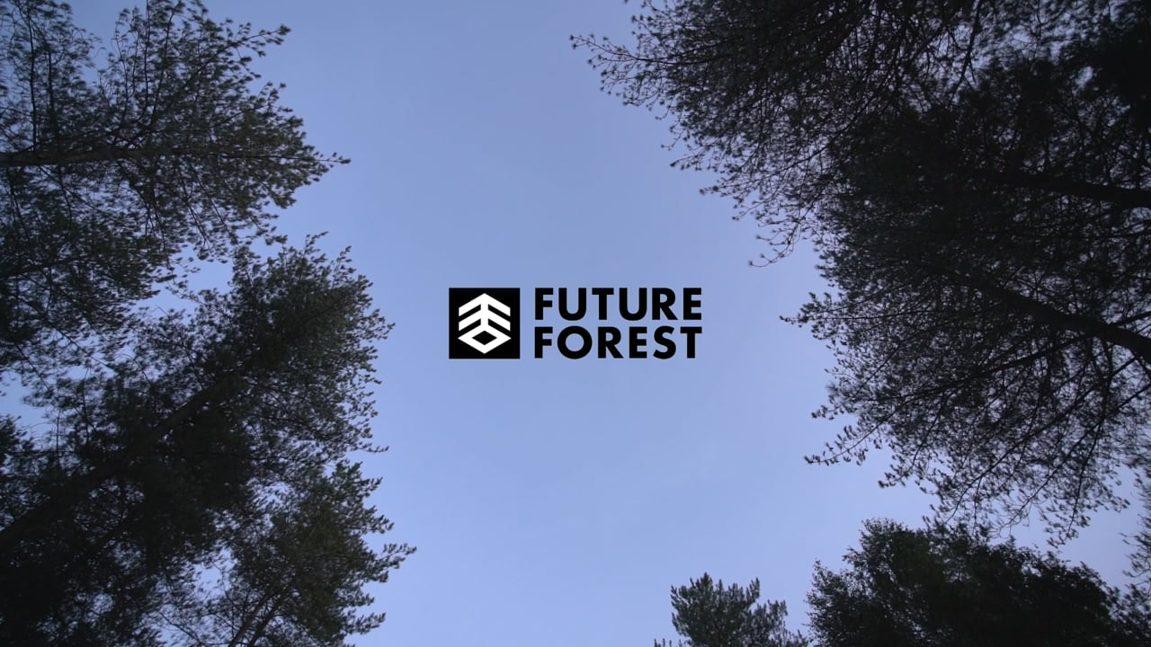Future Forest  Moors Valley project