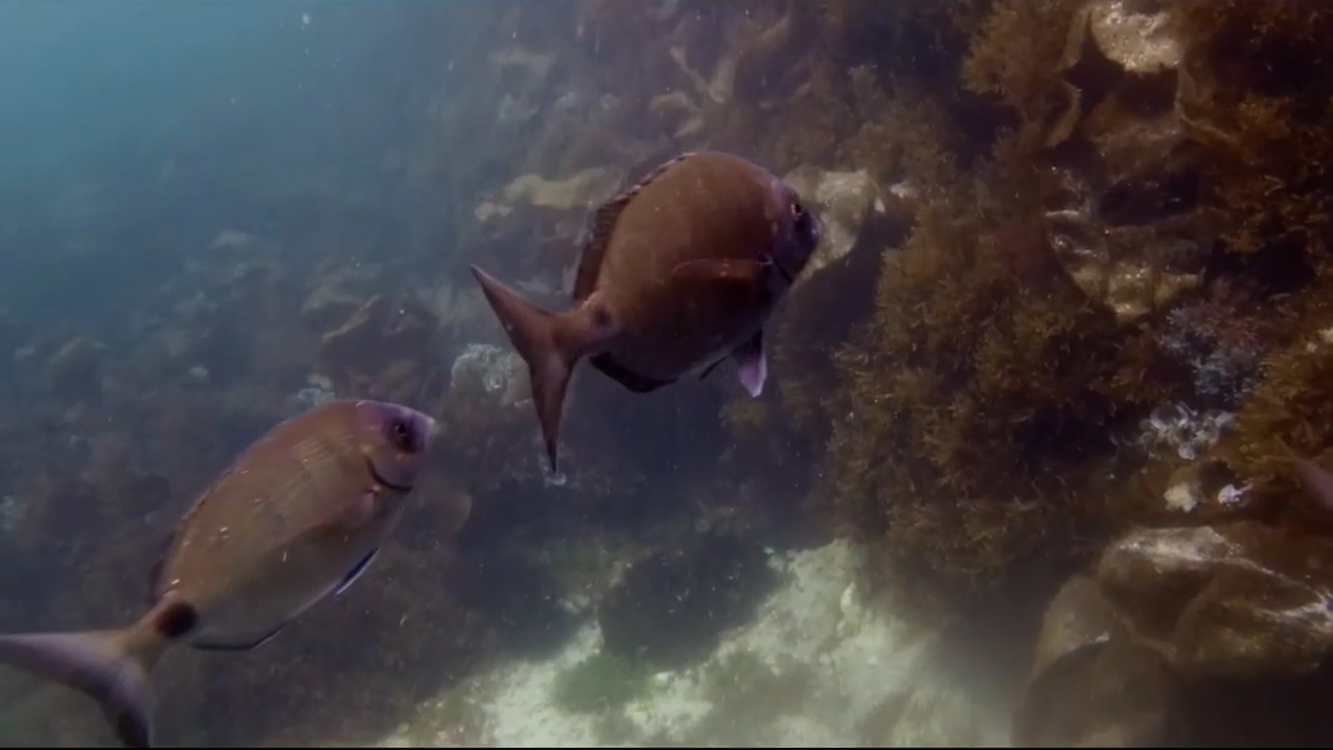 Directos 4 de setembro - Rutas Interpretativas Submarinas
