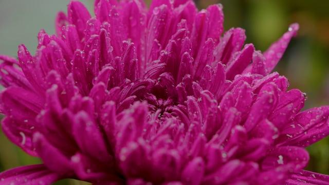 Amazing Flowers. Episode 1