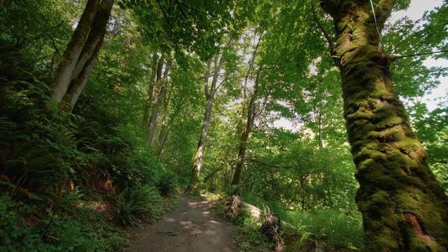 4K Virtual Hike through May Creek Park, Newcastle, Washigton State
