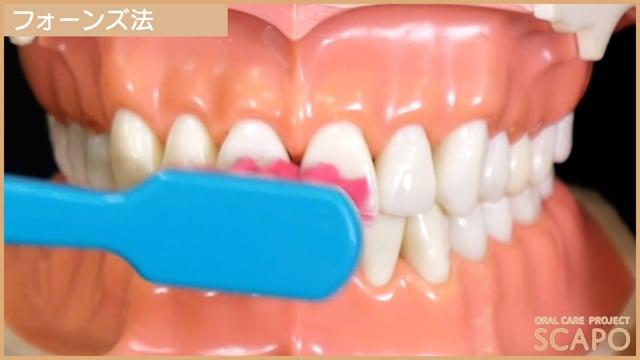 歯みがきの仕方~フォーンズ法~