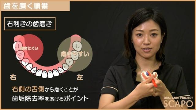 歯みがきの歯の磨く順番
