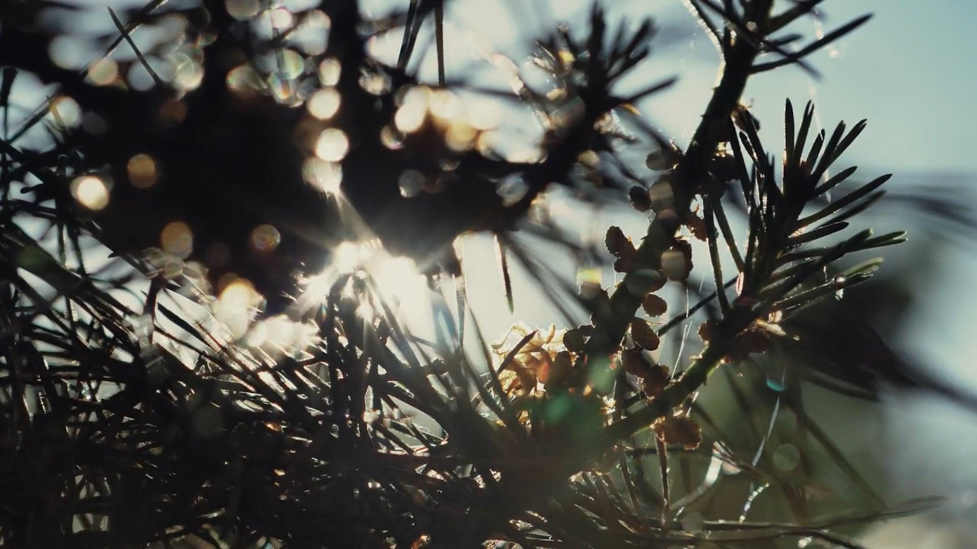 Film Chevalier Paysage - Director's cut