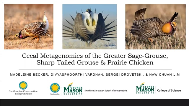 Cecal Metagenomics of the Greater Sage-Grouse, Sharp-Tailed Grouse & Prairie Chicken