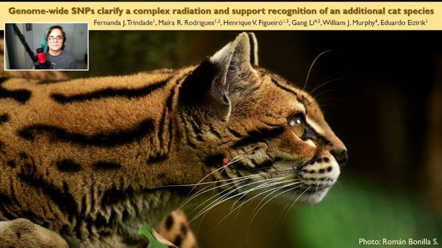 Genome-wide SNPs clarify a complex radiation and support recognition of an additional cat species