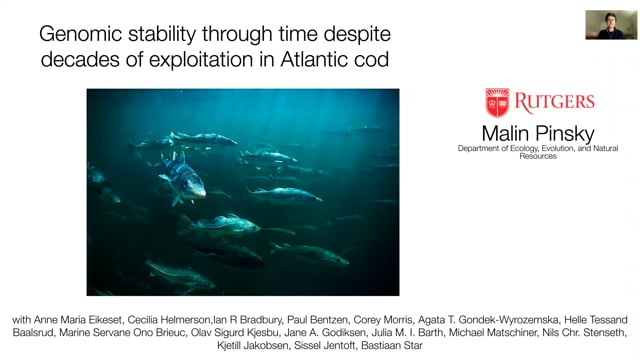 Genomic stability through time despite decades of exploitation in cod on both sides of the Atlantic