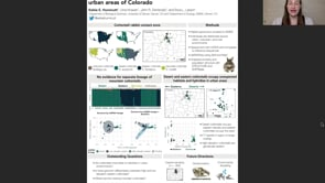Hybridization between overlapping cottontail species in urban areas of Colorado