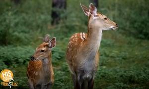 Deer, Bunnies, and Hope...Oh My?