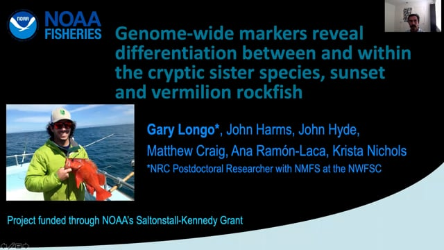Genome-wide markers reveal differentiation between and within the cryptic sister species, sunset and vermilion rockfish