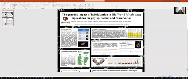 The genomic impact of hybridization in Old World Myotis bats; implications for phylogenomics and conservation