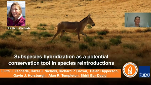 Subspecies hybridization as a potential conservation tool in species reintroductions
