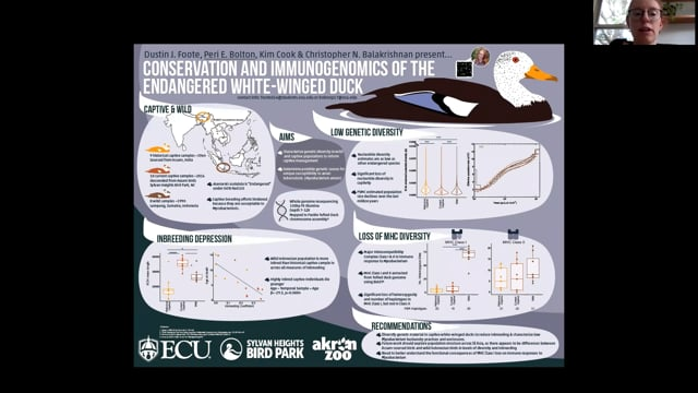 Conservation and immunogenomics of the endangered white-winged duck