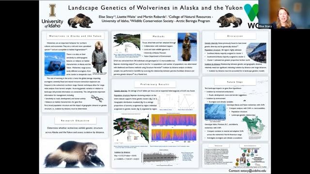 Landscape Genetics of Wolverines in Alaska and Yukon