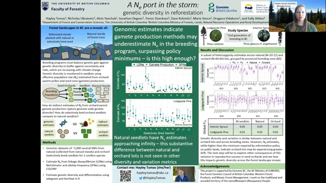 A Ne port in the storm: genetic diversity in BC reforestation