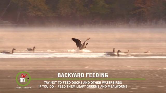 Backyard Feeding