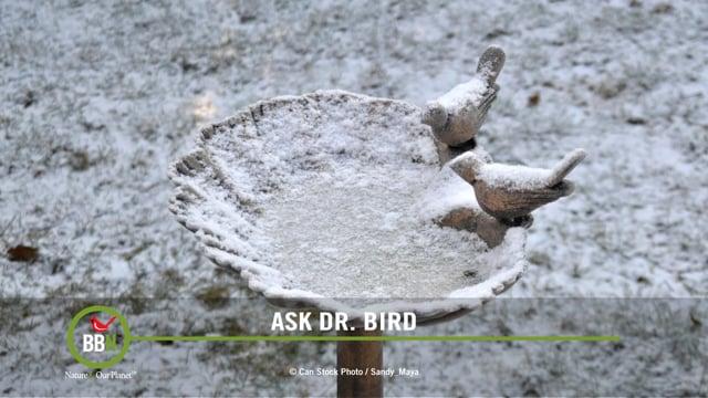 Ask Dr. Bird