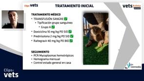 Caso clínico -  Anemia hemolítica inmunomediada felina