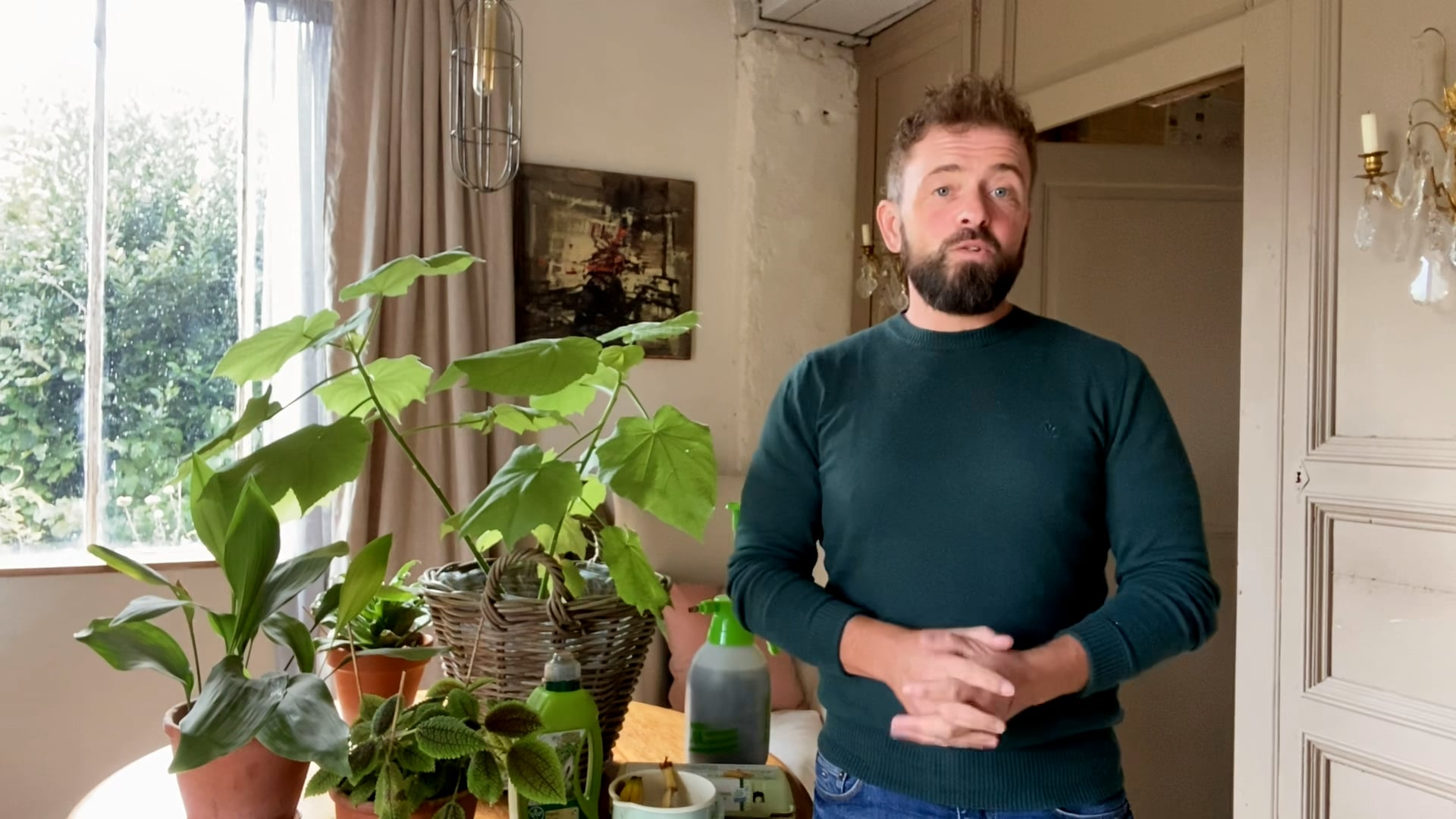 Chestertons | Houseplant Feed