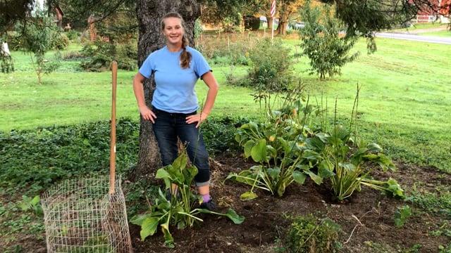 Dividing and Transplanting Perennials in the Fall.MOV