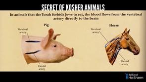Secret of Kosher Animals