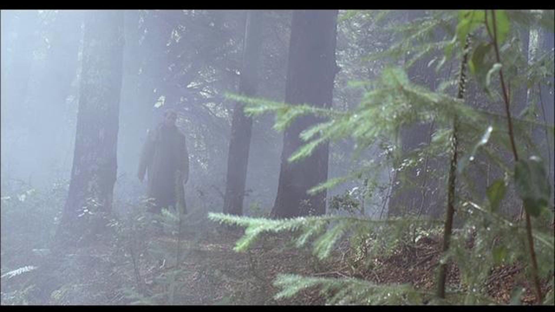 "Rodniki ""Forest"""