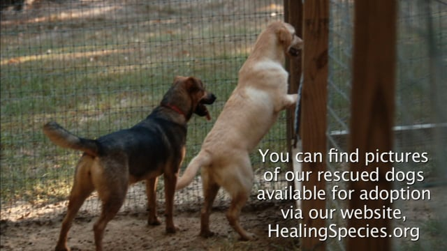 Healing Species and The Sanctuary Need Your Help