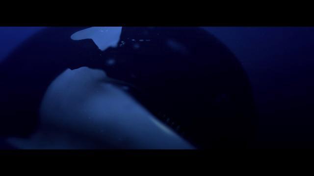 ROGER SHAH pres. SUNLOUNGER - FEELS LIKE HEAVEN (Official Music Video)