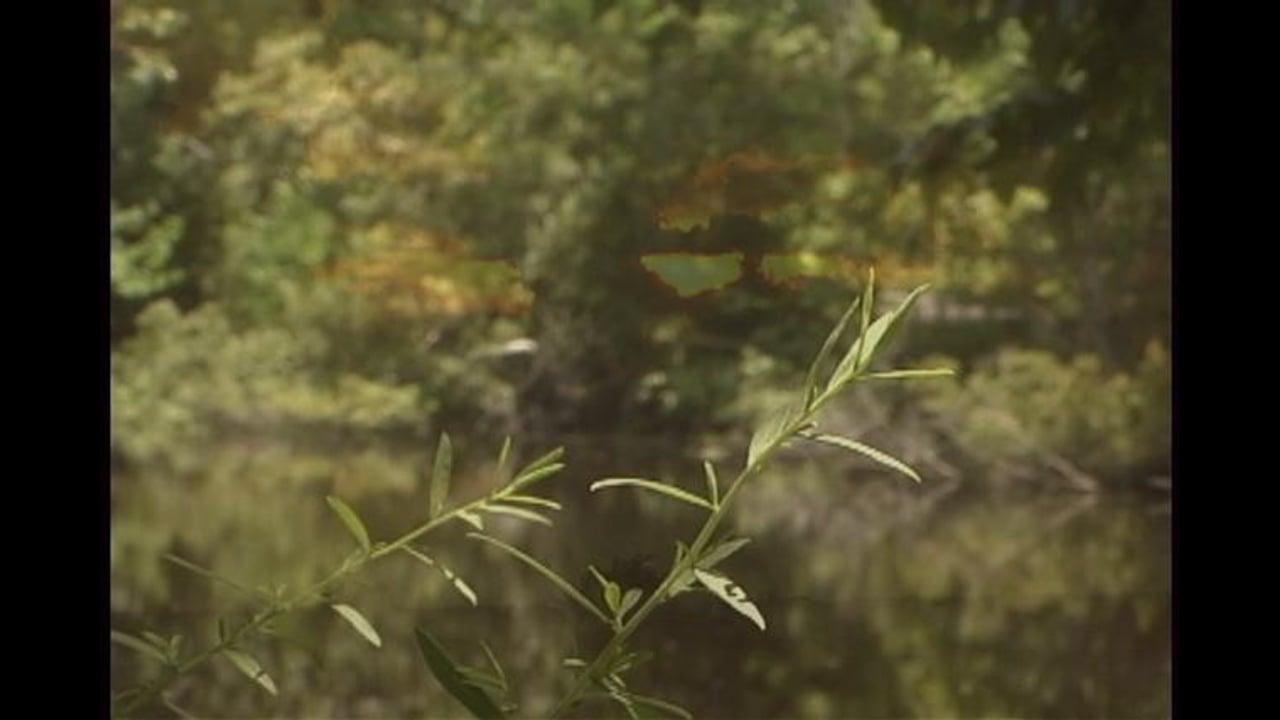 The Invaluable Marsh Surrounding New Orleans
