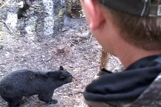 Trijicon Black Bear Hunt