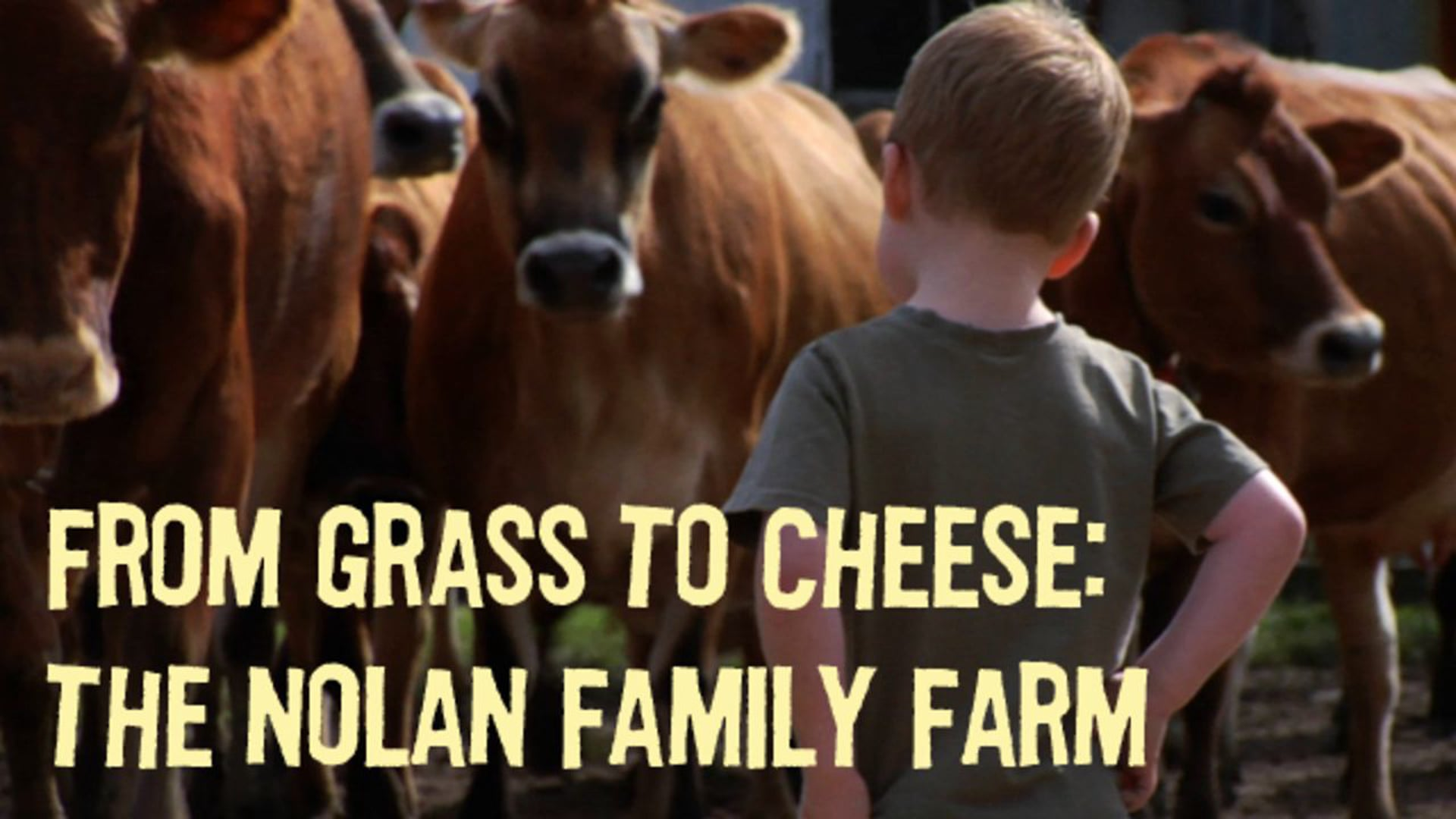 From Grass to Cheese: The Nolan Family Farm