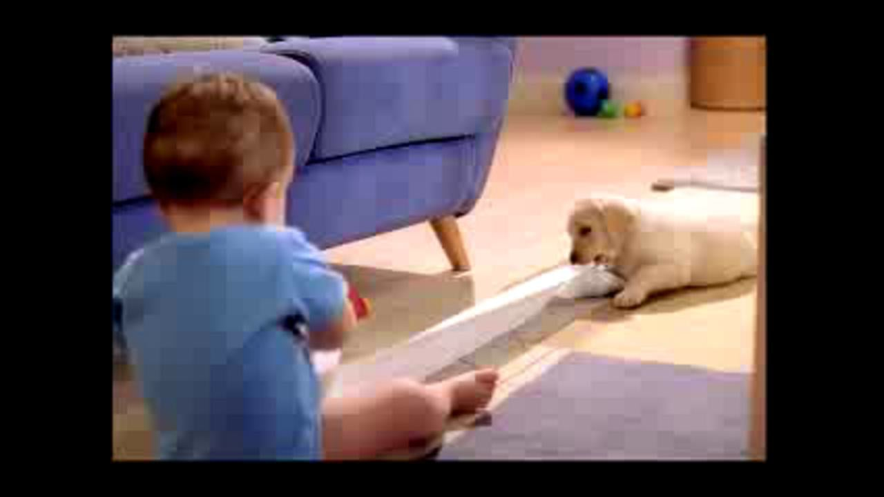 Andrex Commercial
