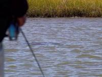 Topwater fly Redfish