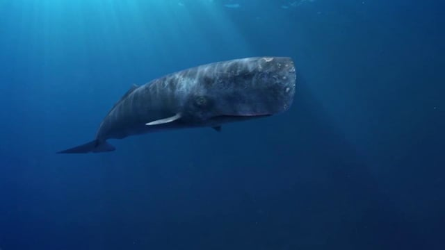 Colorado Lottery Whale