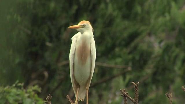 Un touriste dans ma tribu : le sanctuaire des oiseaux