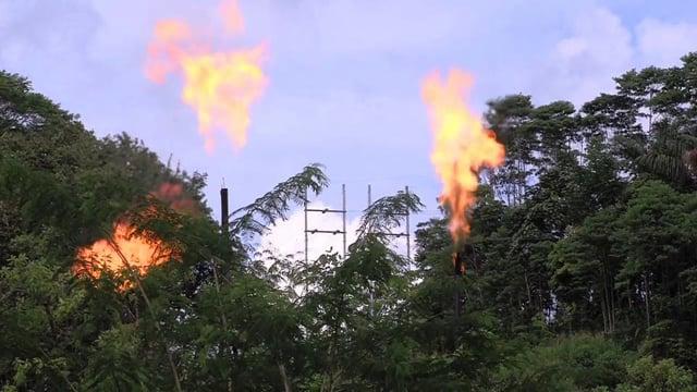 Un touriste dans ma tribu : Les Huaroni face aux compagnies pétrolières