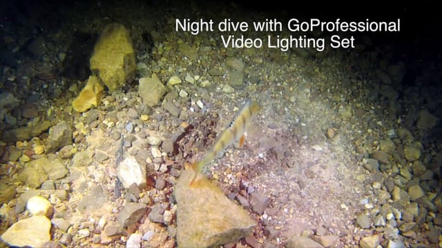Night Dive with GoProfessional Viedo Set