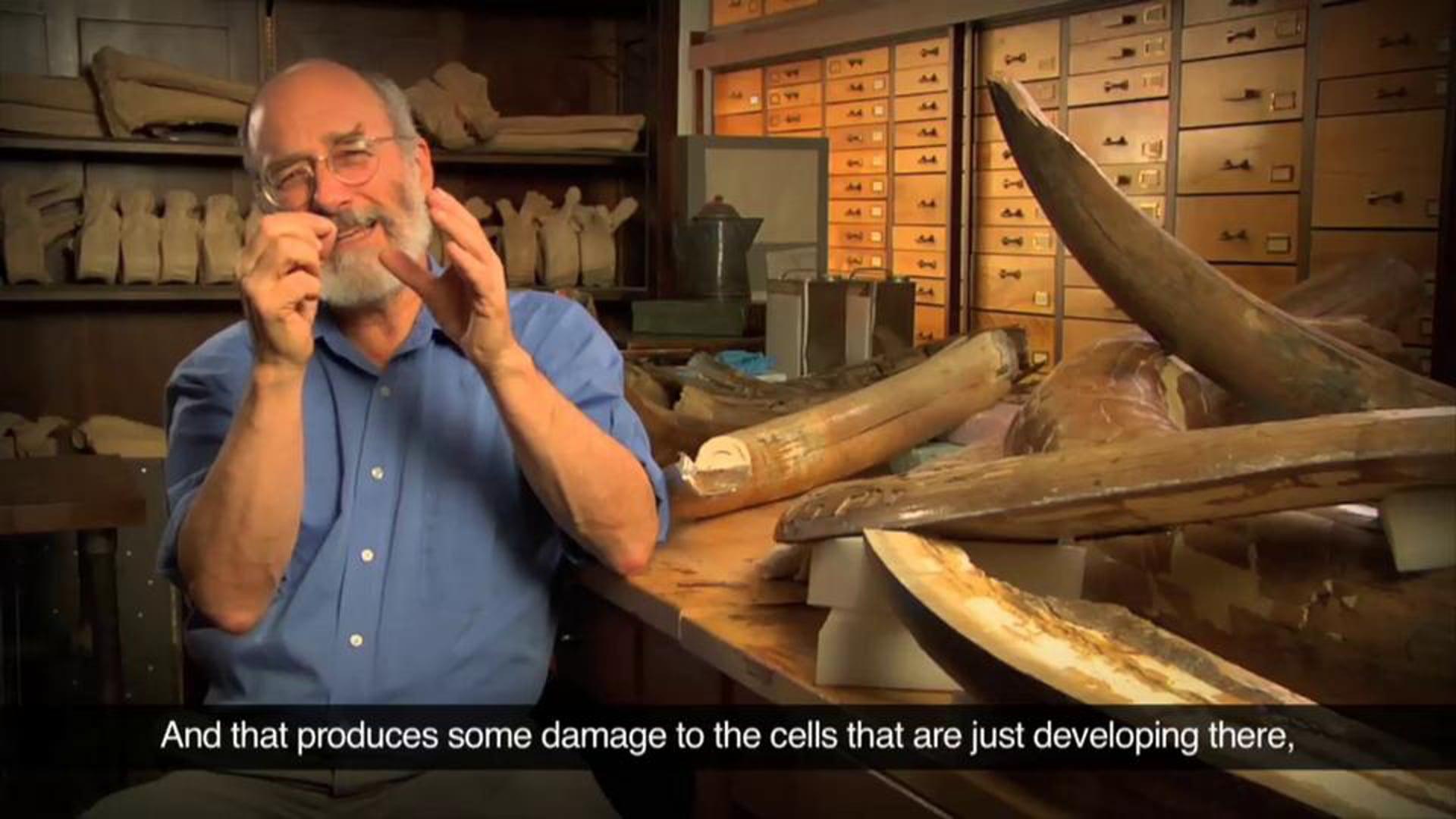 Mammoth Tusk Analysis