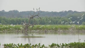 Walk in the Wetlands - GeoCaching