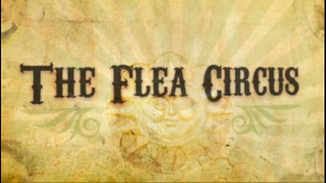 HP Flea Circus