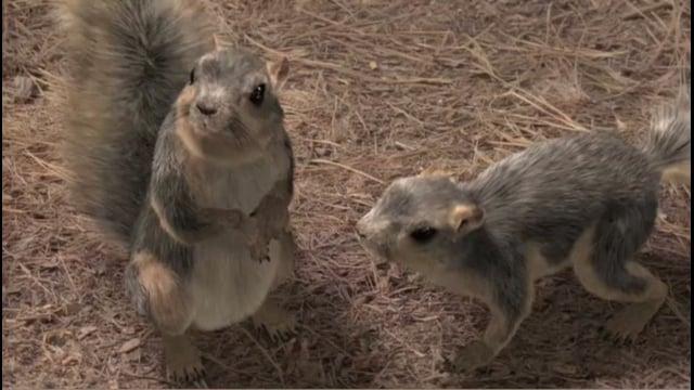 Squirrel Crazy