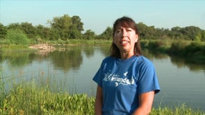 Walk in the Wetlands - Fish Samples