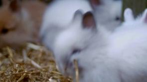 Fantasy Bunny's