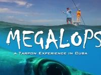 Megalops